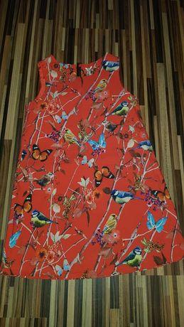 Sukienka next 116 sikorki motyle kwiaty print śliczna pomarańczowa