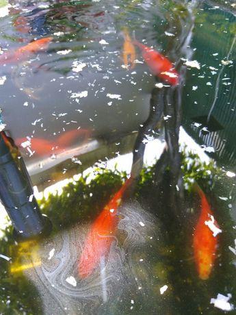 Peixes para lago