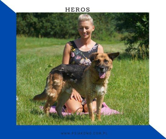 HEROS - rezolutny, bardzo czujny psiak szuka domu