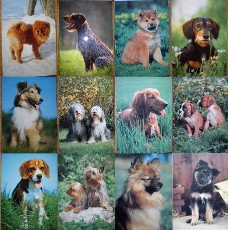 12 pocztówek z psami (niezapisane)