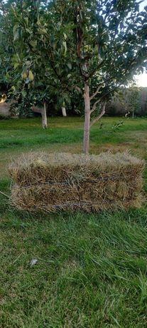 Луговое сено ( клевер/люцерна)