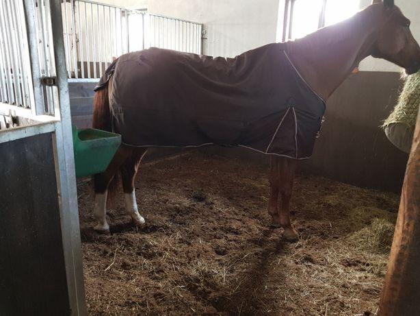Ściółka dla koni-torfowa.Dostawa w cenie cały kraj 1 paleta 5000 litr.