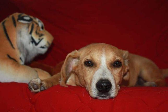Собака Рой, 5 месяцев, собачка, пес