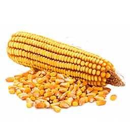 Kukurydza sucha w każdej ilości