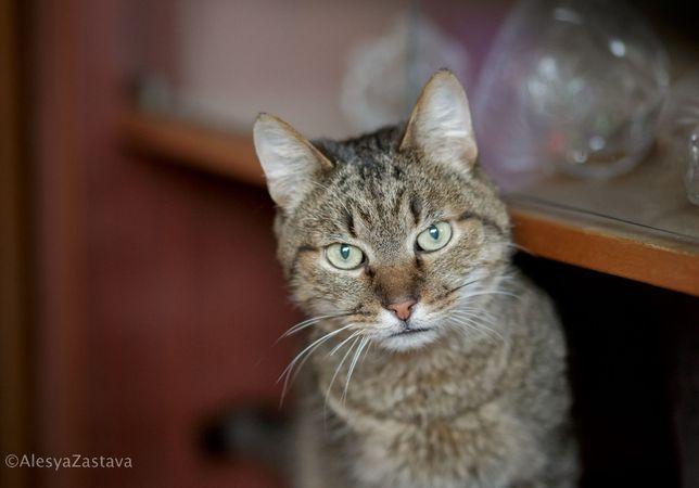 Спасте из приюта ласкового воспитанного кота кастрирован