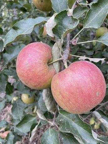 Сливы и яблоки.  От производителя