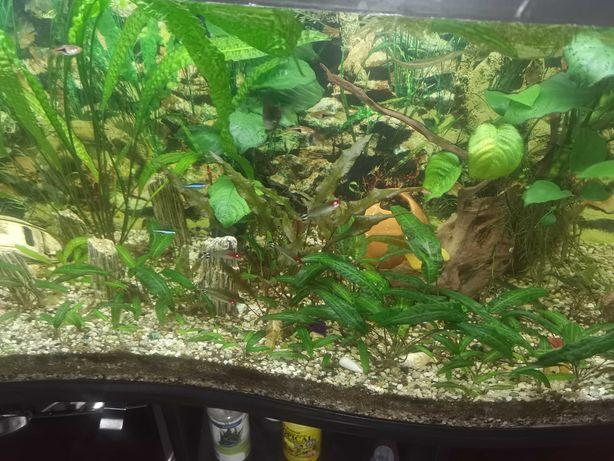 Akwarium 250l z rybkami