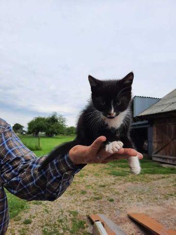 Oddam kota czarnego z białymi łapkami!
