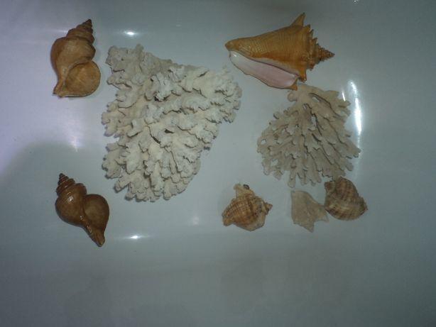 Кораллы.Ракушки.Натуральный.Советских времен.