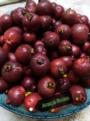 Árvores de fruto- Araçá Roxo.