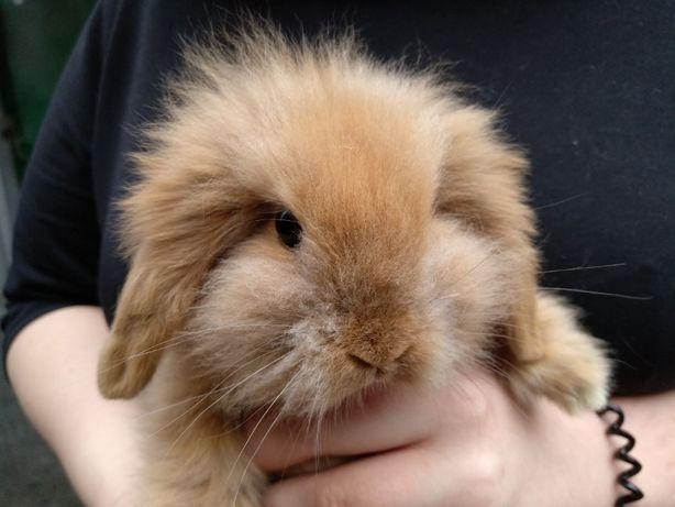 Кролики разного цвета декоративный