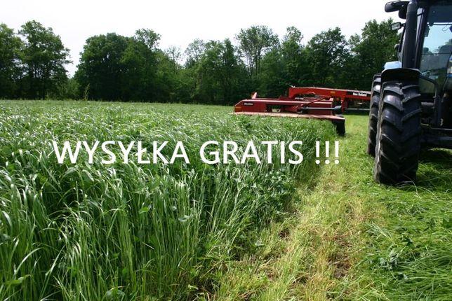Nasiona kupkówka tymotka koniczyna kostrzewa lucerna Wysyłka GRATIS!!!