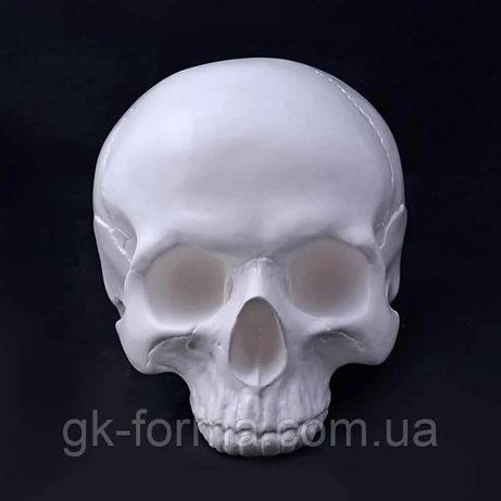 Череп человека без челюсти белый