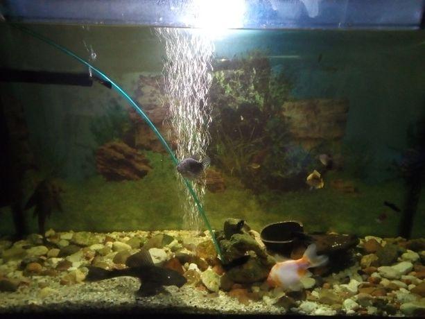 Akwarium z wyposażeniem