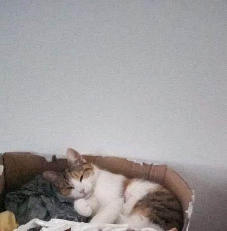 Zaginęła kotka w Dzierzoniowie