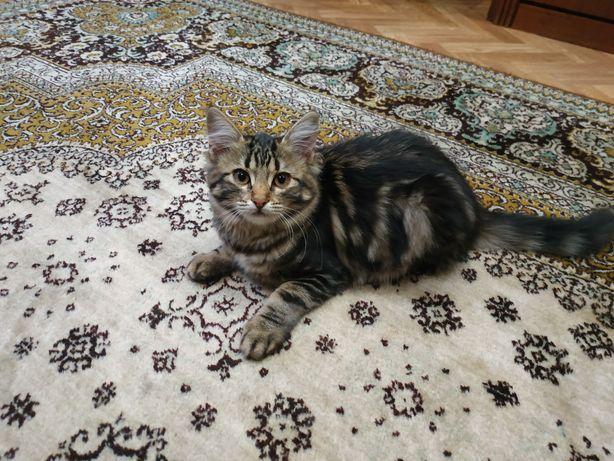 Милые котята 3,5 месяца
