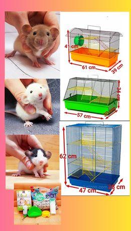 Крыски дамбо,крысы,крысята