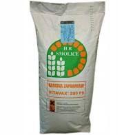 Kukurydza Lokata FAO 220 ziarno materiał siewny