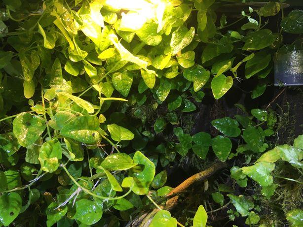 Террариумные палюдариумные растения