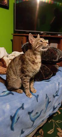Zaginął kot - Jastrzębie Zdrój