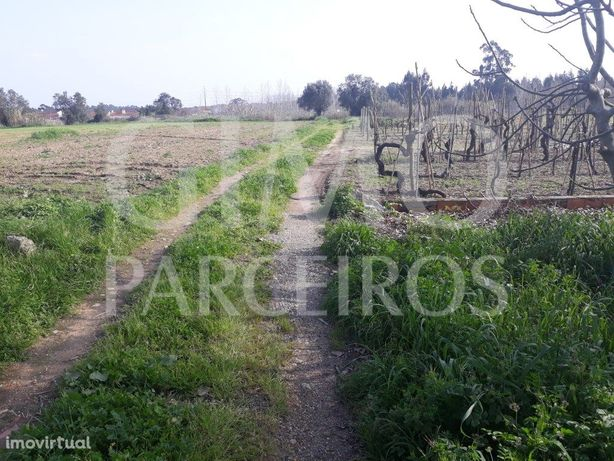 Terreno agrícola Bustos