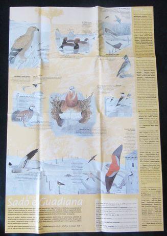 Cartaz: Roteiros Ornitológicos do Alentejo (frente e verso)