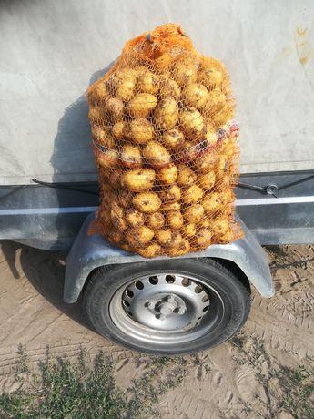 Ziemniaki jadalne odmiana gala