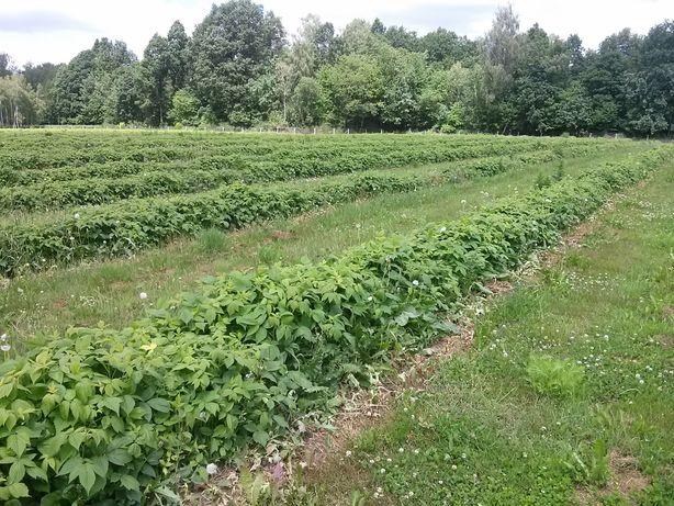 Działka rolna Słotwiny-Jaworce Karczmiska 2,1ha