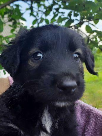Красивенный щенок - Бой