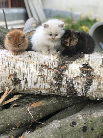 Віддам котиків