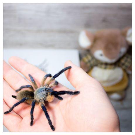 Арагог бокс подарок паук птицеед корм субстрат пинцет террариум набор