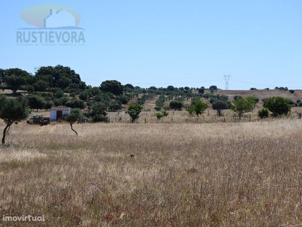 5 Terrenos rústicos contíguos | Estremoz | com Olival e Água