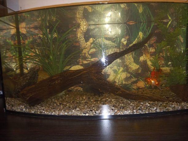 Akwarium 40 l + 4 welony