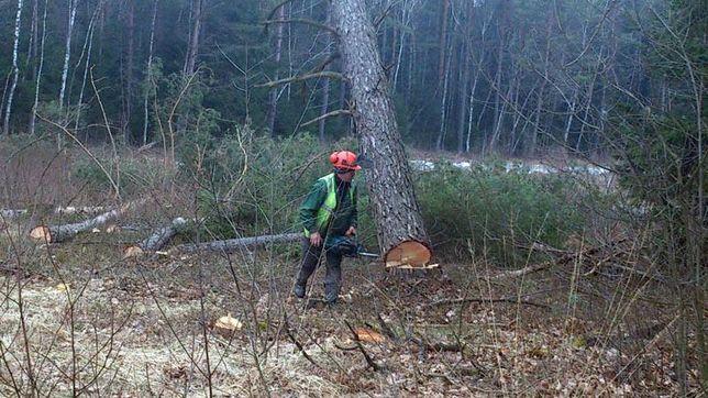 wycinka drzew,lasow-oczyszczenie terenu z galezi,korzeni,karp,rębak