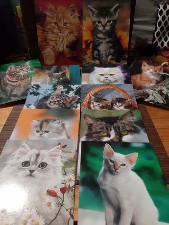 Zestaw dwunastu pocztówek unigraf z kotami