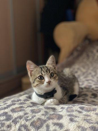 Ищу семью - прелесный котенок