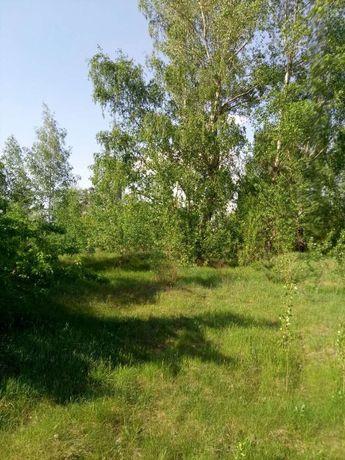 Нижняя Дубечня, 12 соток для садоводства