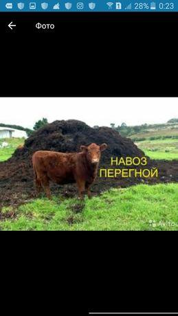 Перегной коровый