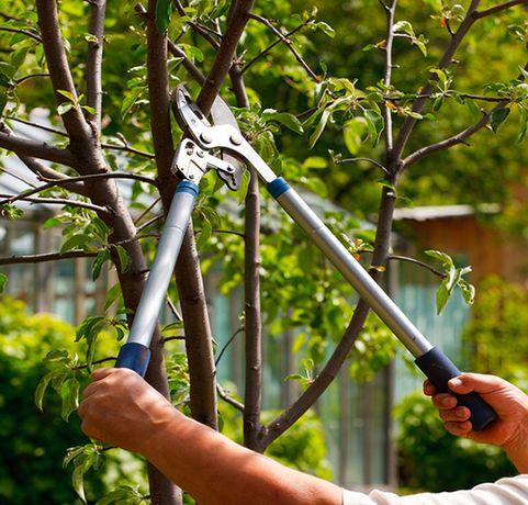 Профессиональная подрезка фруктовых деревьев