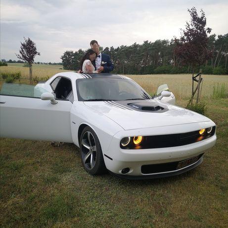 Dodge Challenger Shaker V8 - do ślubu