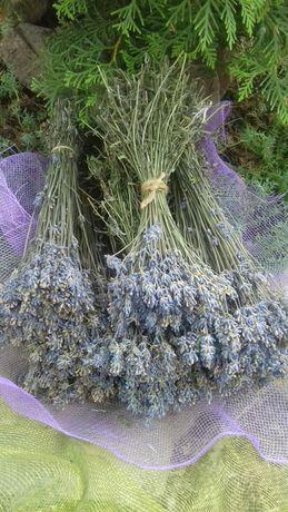 Букеты из лаванды сухоцвет саше лавандовые антистрессовые мешочки