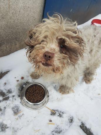 W okolicy Tuszyna znaleziono psa