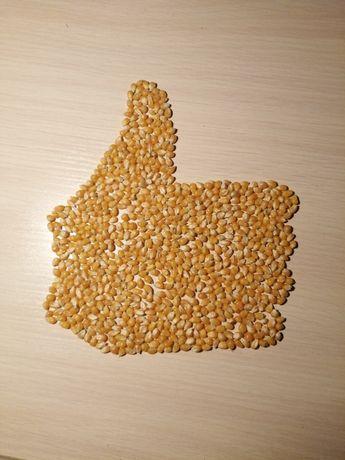 Отличное ЗЕРНО кукурузы для ПОПКОРНА качественное, очень крутое