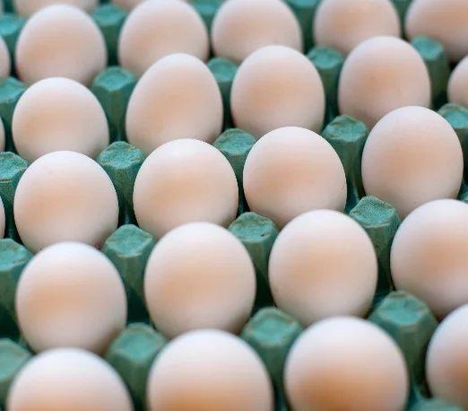 Инкубационное яйцо бройллер