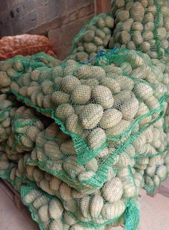 Ziemniaki (Tajfun) - jadalne i rozmiaru sadzeniaka