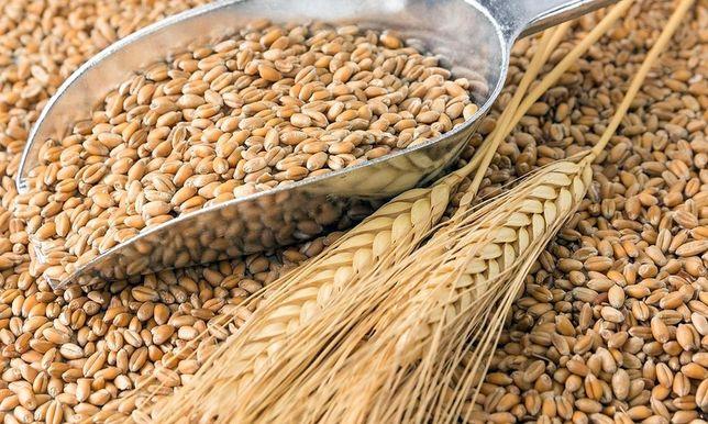 Продам Зерно, Ячмень, Пшеница
