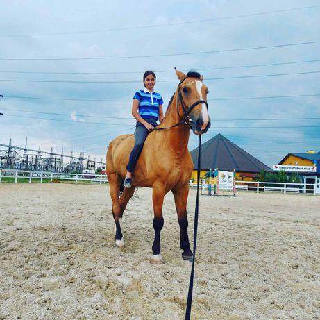 Кінь, лошадь, мерин.