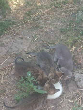 Котята, котики, кошенята безкоштошно