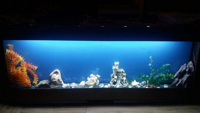 Настенный аквариум 2300