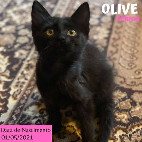 Gatinha 3 meses para adoção (Olive)